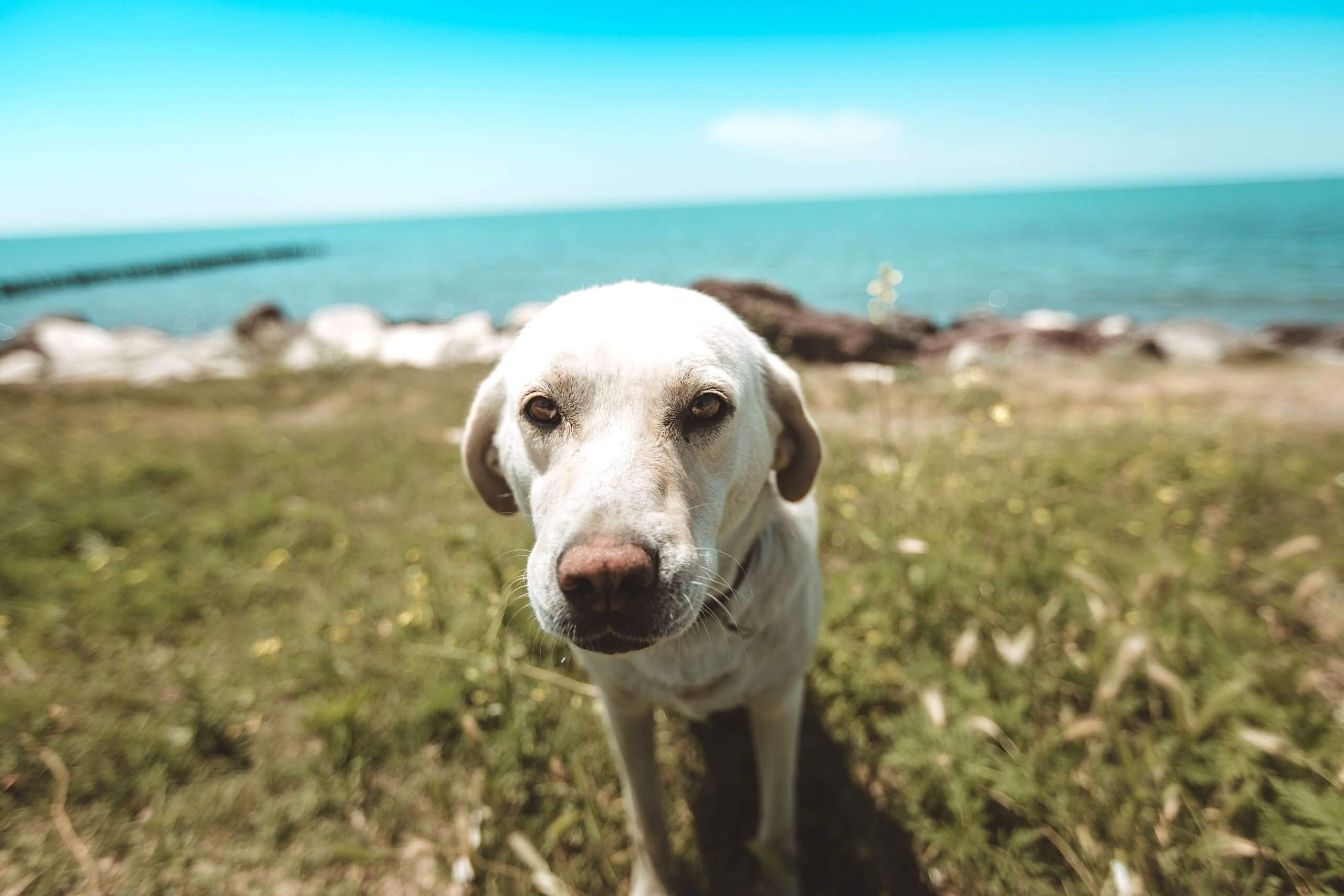 'Does my Dog Need a Passport?': 9 Taking Pets Abroad FAQs